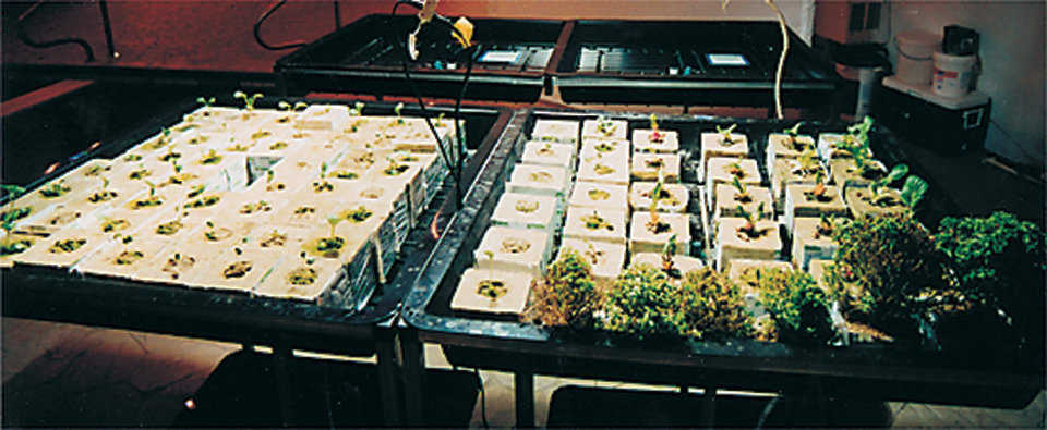 Indoor farming — With a minimum of labor and power, the owner grows many useful plants!