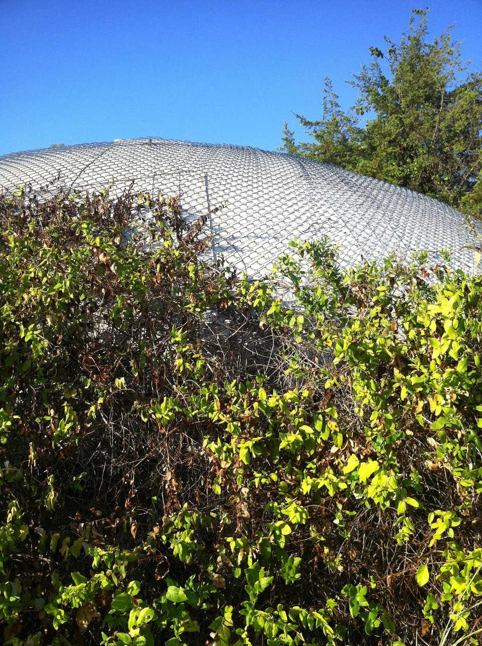 Green roofs can be used to protect your dome's Airform.