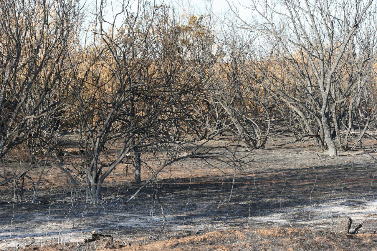 June 2011: Texas wildfire destroyed 100,000 acres before it was stopped.